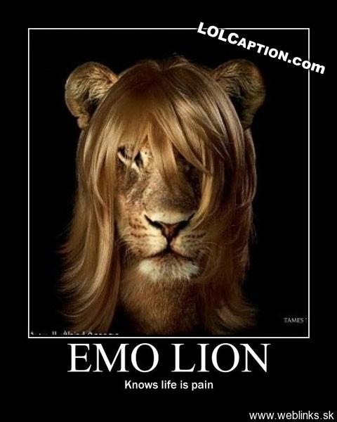 lolcaption-emo-lion-knows-no-pain-emolion