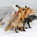 Haluz na dnes: Firefox Plugins :)