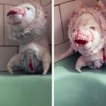 Škaredé bábiky pre neposlušné detičky