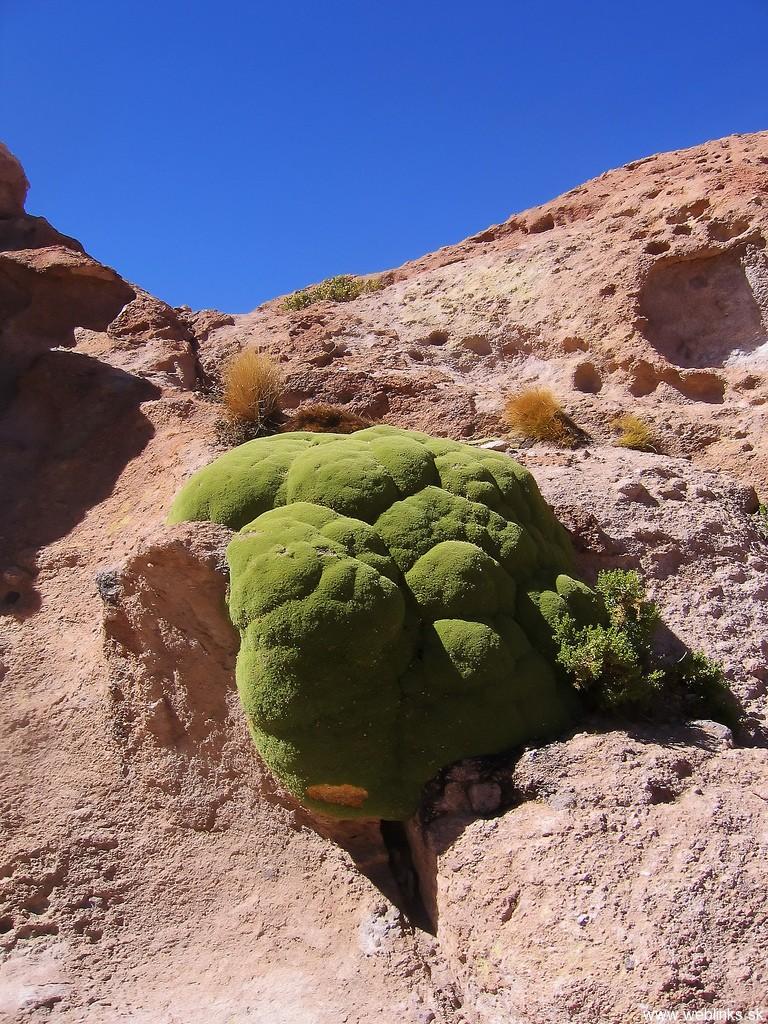 Alien-looking-plant-growing-in-South-America