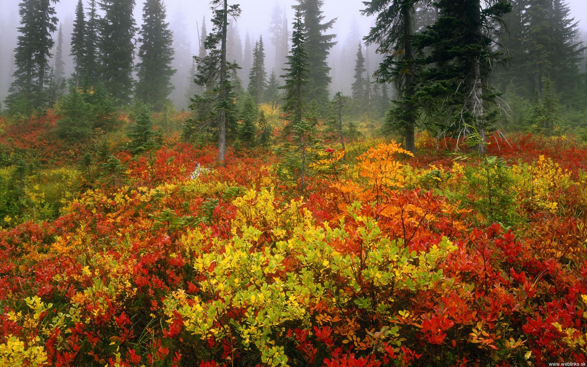 USA, Washington, Mt Rainier NP, Fall colors on a cloudy morning