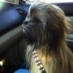 Star Wars: Chewbacca Junior :)