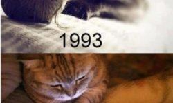 Mačičky vtedy a dnes..