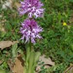 Úplne šialene zaujimavá, nádherná orchidea