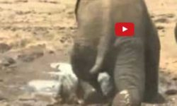 Nemotorný sloník ti vyčaruje strašne široký úsmev a potok sĺz :)