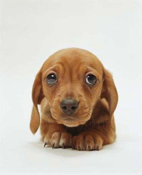 dog-eyes-1