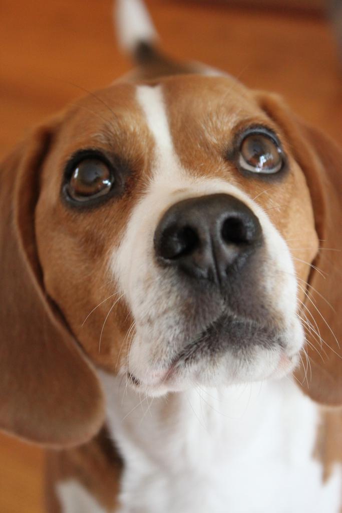 dog-eyes-11