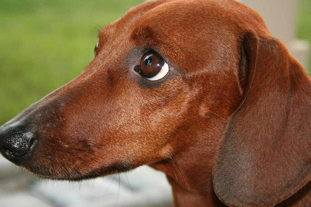 dog-eyes-14