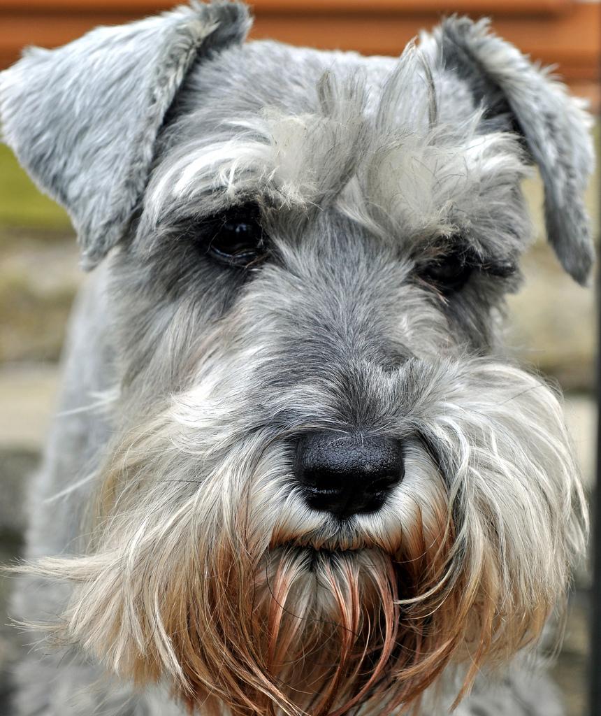 dog-eyes-17