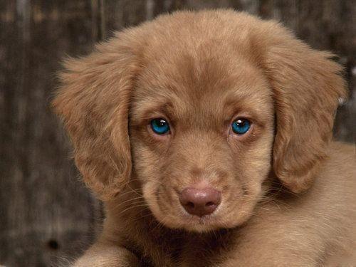 dog-eyes-2