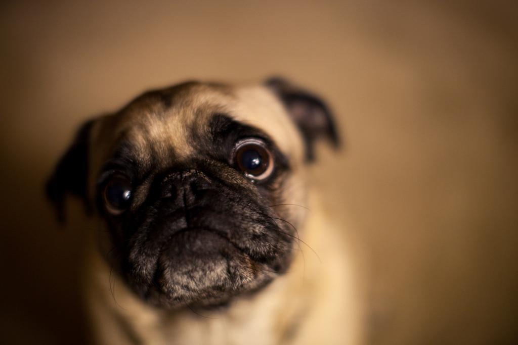 dog-eyes-21