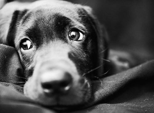 dog-eyes-6