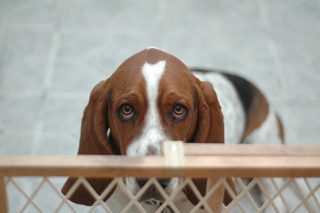 dog-eyes-7