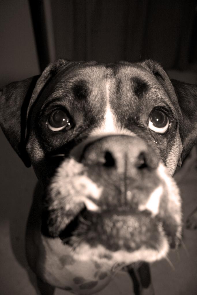 dog-eyes-8