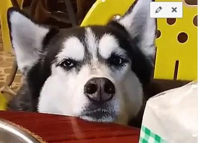 Šeci jedia a ja ňe?