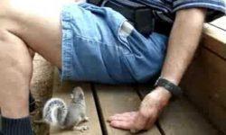 Také milé veveričiatko