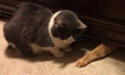Zlodejské mačky