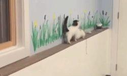 Mačička sa vynašla pri zahnaní do kúta