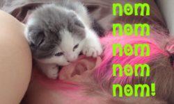 Mačička cmúľajúca uško