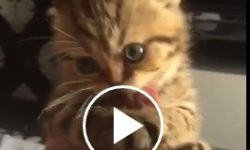 Mačička sa nechce podeliť s hovädzím :)